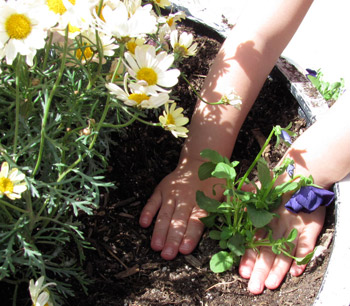 planting flowers with preschoolers