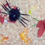 Leaves, sawdust and bugs