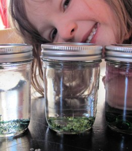 preschool activity sensory jars