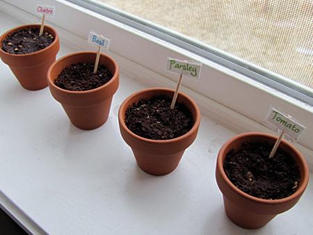 preschool gardening pots planted