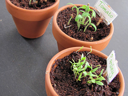 mini garden pots for preschool gardening