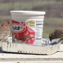 Simple plastic tub bird feeder