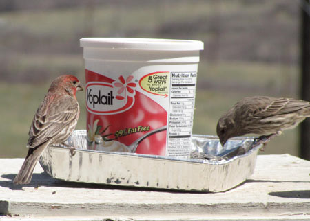 plastic tub bird feeder