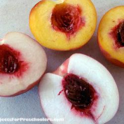 Peachy taste test and peach cobbler