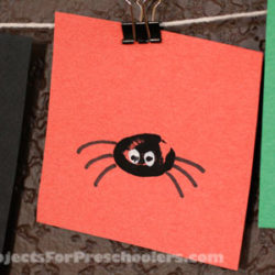 Thumbprint spiders